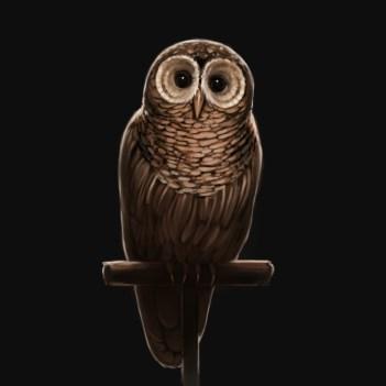 owl_brown