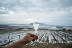 ice-wine1